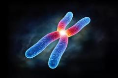生男生女由香港验Y染色体鉴定性别说了算!