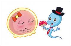 爆料:香港抽血查Y染色体报告几时出