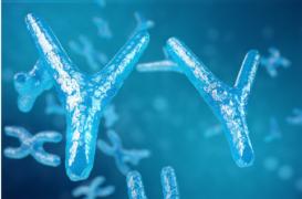 Y染色体基因决定性别,香港验Y测DNA可以知晓男女