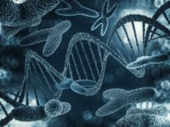 梳理DNA和香港验Y-DNA查男女之间的关系